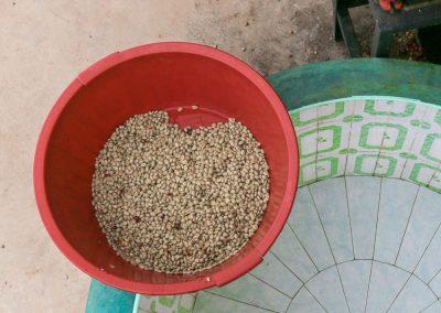 Mokrý proces zpracování zelené kávy